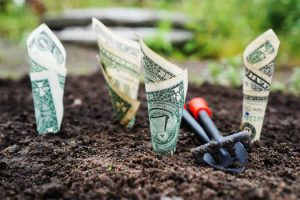 Money growing in a garden